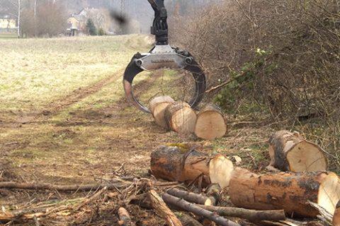 Brennholz sammeln in den Neckarwiesen